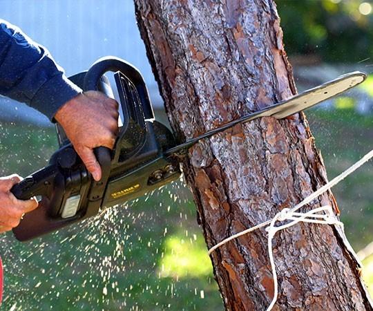 Спил деревьев в Анапе и Краснодарском крае