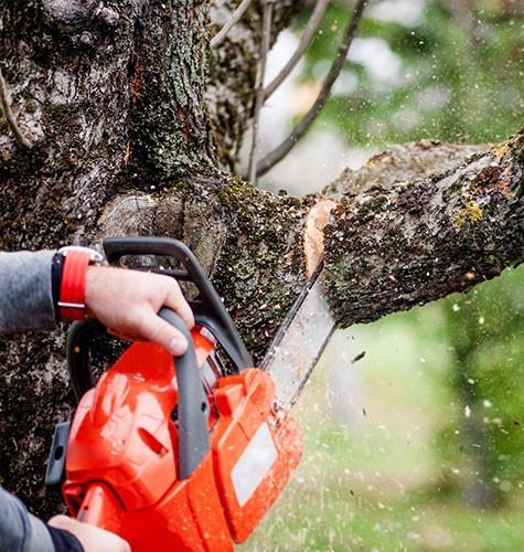 Услуга по спиливанию деревьев в Анапе